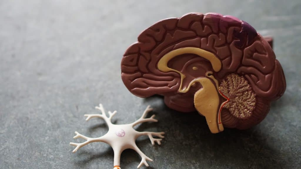 Educational brain toy